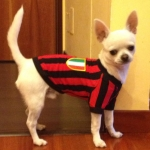 Maglietta Rossonera per cani