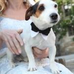 Corbata de lazo para Perro Pequeño