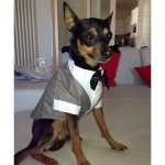 Evening Dress for Small Dogs in Gray
