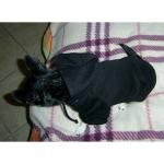 Felpa per Cani colore Nero
