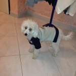 Jersey para perro cuerda y azul con cremallera