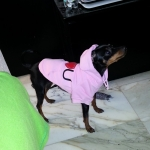 Pink I LOVE YOU Dog Hoodie