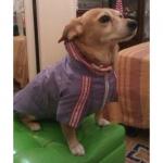 Impermeabile Lilla per cani di taglia piccola