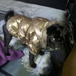 Dog Bomber Jacket in Gold