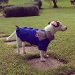 Giacca antivento Blu per cani con chiusura sul dorso