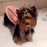 Shearling Dog Coat in Pink