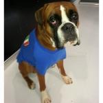 T-shirt de l'équipe Nationale Italienne pour Grand Chien