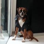 Chaqueta de piel sintética negra para perros grandes