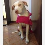 Impermeabile Rosa smanicato per cani grandi