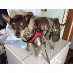 Onesie padded Jacket for Dog in Gold