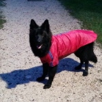 Red Raincoat for Large Dog