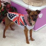 Dog Coat with English Flag