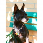 Collana per Cani con Perline Multicolori