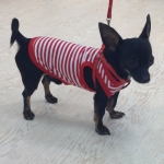 Dog Vest with white and red stripes