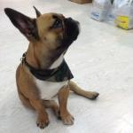 Collar para Perro con Bandana de Camuflaje Verde