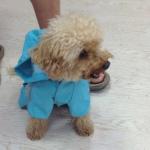 FBI Blue Raincoat for Small Dog 4 Legs