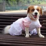 Vestito da Damigella Bianco e Rosa per Cani