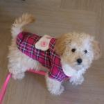 Magenta Tartan Coat for Small Dogs