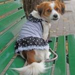 Vestitino per Cani Minnie Grigio