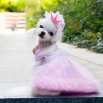 Dog Dress Sissi Pink with White Polka Dots