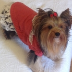 Red Wool Sweater with Lace for Dog