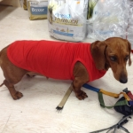 Red Tank Top for Dachshund