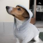 Sudadera Basica para perro pequeño en Gris