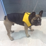 Yellow Sleeveless Jacket for Dogs