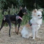 Pettorina regolabile Verde Mimetica per Cane Piccolo