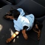 Felpa per Cani Celeste