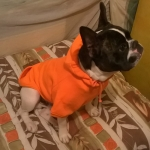 Felpa Arancione per Cani di Grossa Taglia
