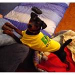 Maglietta per cani del Brasile