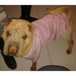 Felpa Viola Vellutata per cani di taglia grande