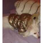 Chaqueta de Bombardero Oro para perros