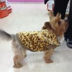 Leopard Coat for Little Dogs