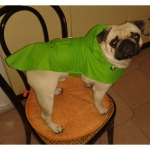Green sleeveless raincoat for small sized dogs