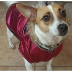 Abrigo para perro en Rojo Púrpura