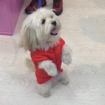 Plain Red Parka with Pocket for dog