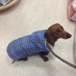 Blue Tartan Sleeveless Coat for Medium Dogs