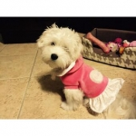 Fiona Pink Dog Dress in Chenille