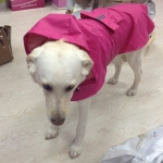 Pink Sleeveless Raincoat for Large Dogs