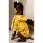 Impermeable FBI Amarillo 4 Patas para Perros Grandes