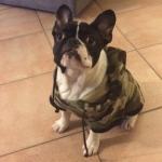 Felpa Verde Mimetica per Cani di Taglia Piccola