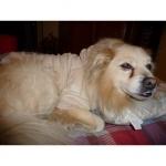 Sudadera Aterciopelada Beige para Perros Pequeños