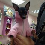 Sudadera Rosa con cremallera para perros
