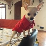 Maglietta Polo Rossa per Cani