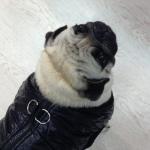 Giacca Nera con apertura sul dorso per cani piccoli