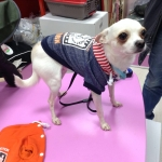 New York Blue Hoodie for Small Dog