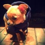 Felpa per Cani colore Blu