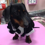 Evening Dress for Small Dogs in Black